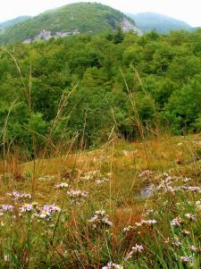 Panthertown Valley
