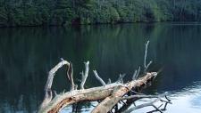 Bent Creek Area